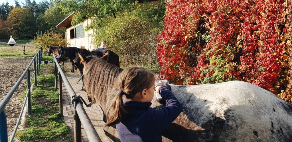 Kinder beim Pferde putzen